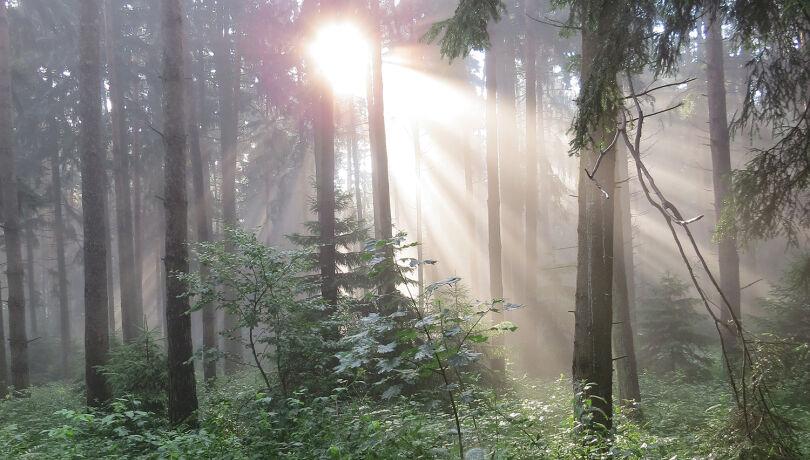Sonnenstimmung im Wald - © Fritz Wolf