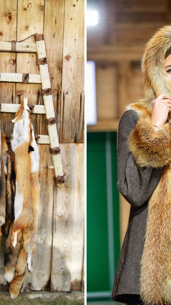 Füchse zum Anziehen - © Fritz Wolf, Andreas Kolarik