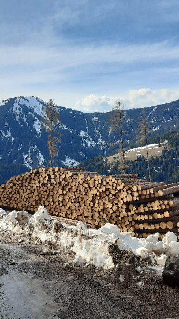 Bundesforste ziehen Jahresbilanz: Klimawandelkosten mit 48 Mio. Euro auf Rekordhoch