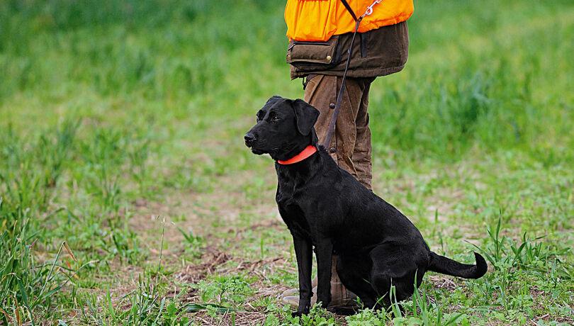 Hundeführer mit Jagdhund - Hundeführer mit Jagdhund (c) WEIDWERK-Archiv/Michael Migos