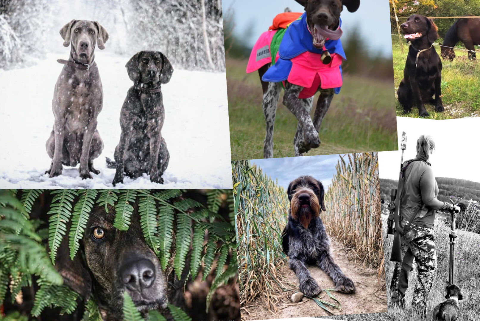 Ob Vorstehhund, Schweißhund oder etwa Bauhund - die Einsatzbereiche eurer Jagdhunde sind vielfältig!