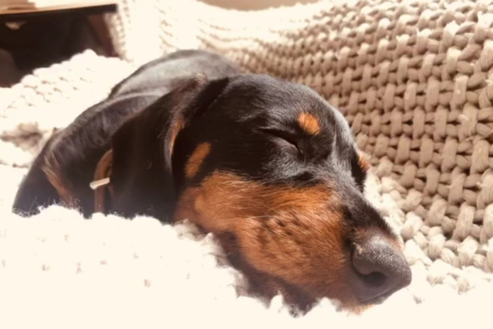 dachshund_agathe_pauer_ - © dachshund_agathe_pauer_