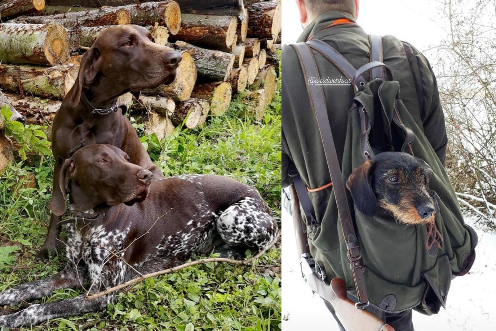 Links: Bernhards Deutsch-Kurzhaar-Rüden Zeno und Bob. Rechts: Bernds kleiner Jagdgefährte.