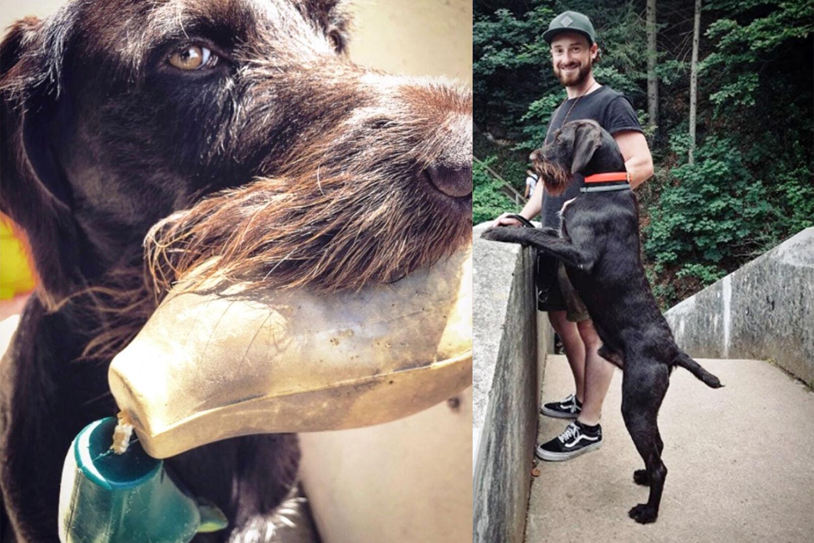 Sebastian übt die Jagd mit seinem Deutsch Drahthaar-Rüden aus. IG: @hunting.places