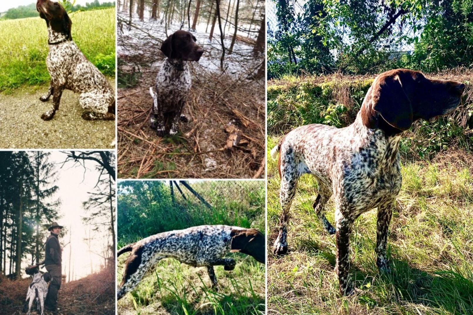 Jäger, Fischer und Hundeführer Martin schickt uns diese Collage. IG: @hunting_flyfishing_nature