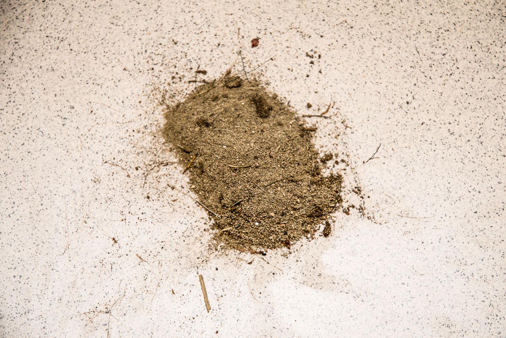 Sand aus der Sommerschwarte - Sand rieselte aus der Sommerschwarte, insgesamt mehr als 1 kg! - © Martin Grasberger