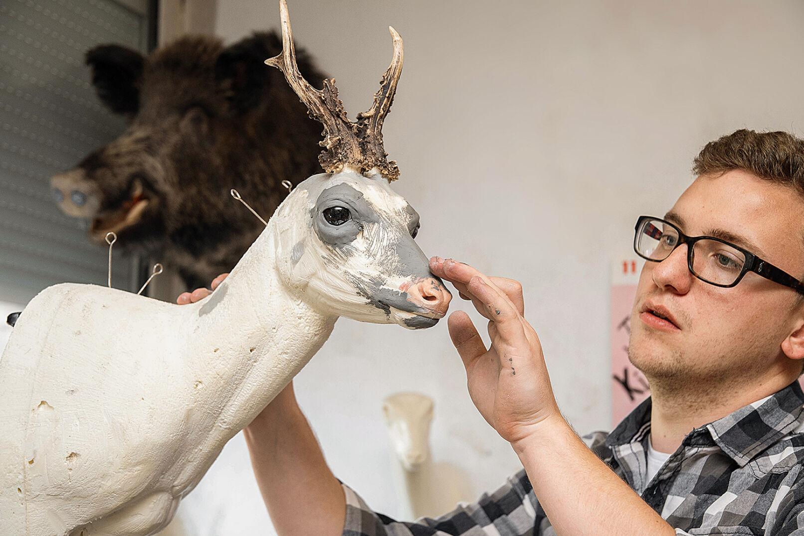 Präparator Daniel Schwarz beim Modellieren der Gesichtspartien eines Rehbock-Vorschlagpräparats. - © Barbara Marko