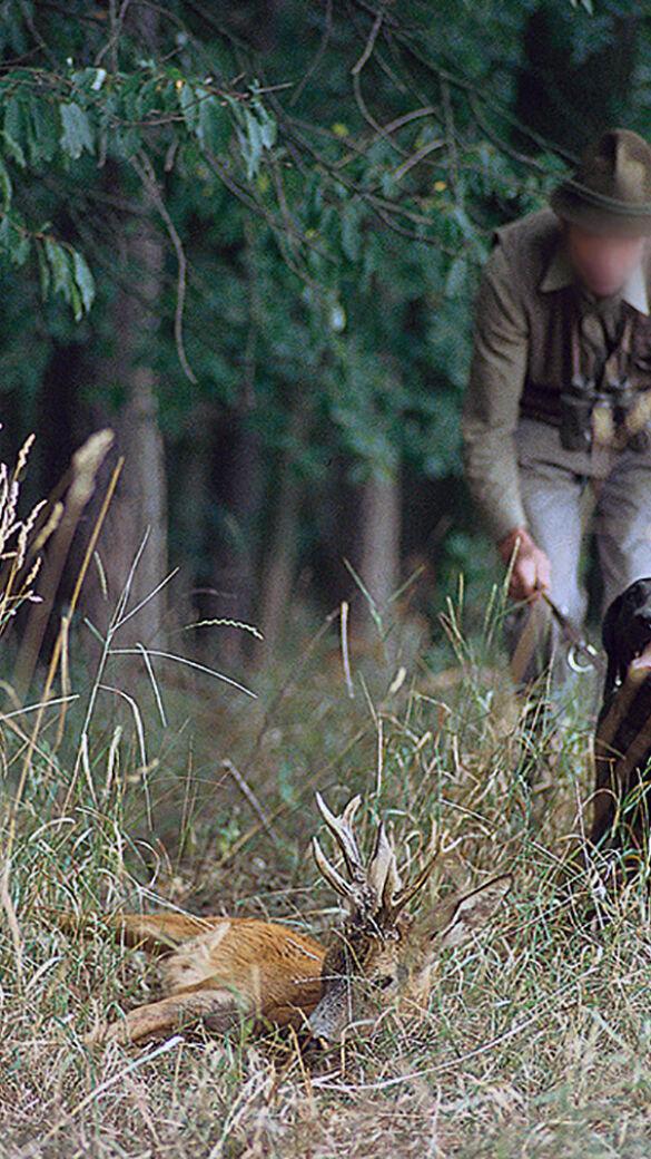 Erneut Wilderer in OÖ (Symbolfoto) - © Helmut Ctverak