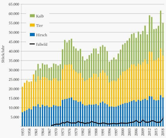 Abbildung 2 - Jährlicher Rotwildabschuss in Österreich von 1955–2018, gegliedert nach Hirschen, Tieren, Kälbern sowie Fallwild von 1968–2018. Auffällig sind die bis Mitte der 1990er-Jahre periodisch auftretenden Höchst- und Tiefstwerte des Abschusses im Abstand von etwa 12 bis 15 Jahren. Danach wurden die Intervalle unregelmäßiger und kürzer. Abschuss-Gipfelungen ergeben sich für die Jahre 1962, (1964), 1977, 1991, 2005, 2012 und vorläufig 2017, Tiefstwerte in den Jahren 1955, 1967, 1983, 1994, 2006 und 2014. Der Maximalabschuss mit 61.545 Stück erfolgte im Jahr 2017. Die Anzahl des in der österreichischen Abschussstatistik erfassten Fallwildes erreichte Spitzenwerte in der Zeit nach 2005 (Maximum 2018 mit 4.425 Stück). Langfristig gesehen, nahmen die jährlichen Fallwildzahlen eher zu. Diese Entwicklung lässt darauf schließen, dass mit den zuletzt hohen Abschüssen österreichweit keine Reduktion des Rotwildbestandes erfolgt ist. Auch der Anteil der Tiere und Kälber am Gesamtabschuss hat sich erheblich verändert und dadurch den Zuwachs und die Bestandesregulierung beeinflusst; Kälber werden in der Statistik erst ab 1961 separat geführt, vorher waren sie bei den Tieren dabei. Um 1960 wurden 36 % Hirsche erlegt, der Anteil Tiere/Kälber war mit 64 % noch relativ gering. Um 1970 stieg der Anteil Tiere/Kälber auf 67 % und danach sukzessive weiter auf derzeit 73 % (2015–2018). Somit entfallen zurzeit knapp 3/4 der jagdlichen Abschusstätigkeit beim Rotwild nicht auf Trophäenträger, sondern zur Regulierung auf Kahlwild. - © Grafik Reimoser