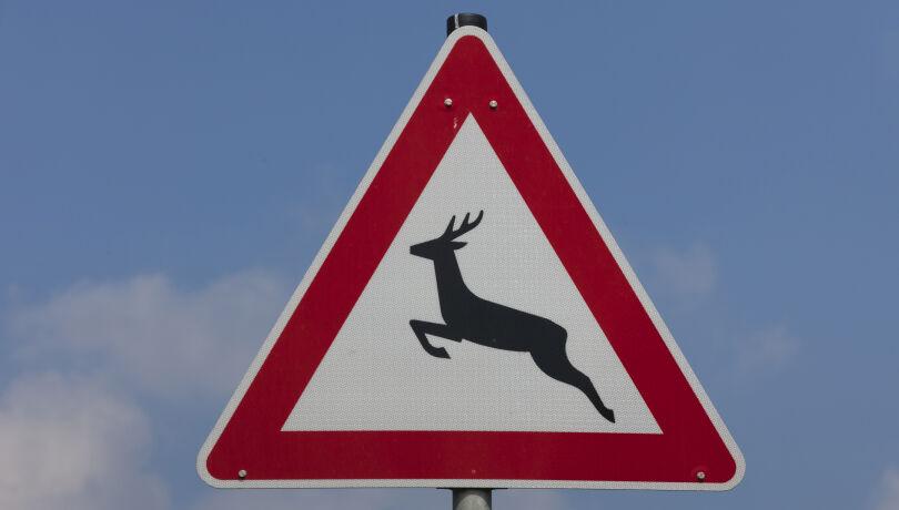 Nicht nur in der Steiermark ein Problem: Wildwechsel auf Straßen - © Sven-Erik Arndt